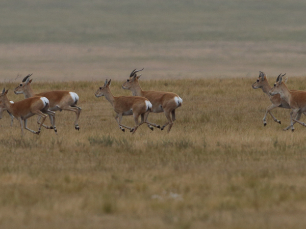 Wildlife research expedition in the Gobi Desert, Mongolia