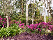 QEII Botanical Gardens, Cayman Islands. Photo by Cayman Islands Tourist Board