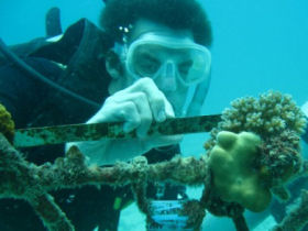 a volunteer measuring coral
