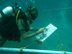 a volunteer carrying out reef surveys