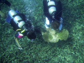 volunteers studying coral