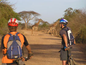 Cycling with Giraffe, Kenya