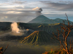 Indonesia holidays, tailor made, Orangutans & Komodo dragons