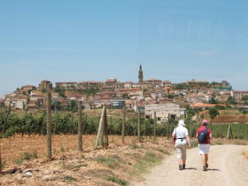 Rioja holiday, Vineyard Trail, Spain