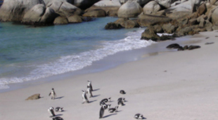 South Africa Volunteer travel holidays