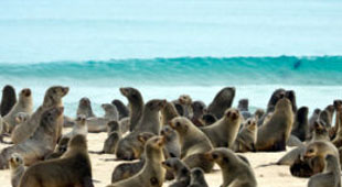 Wildlife holidays with beach holidays