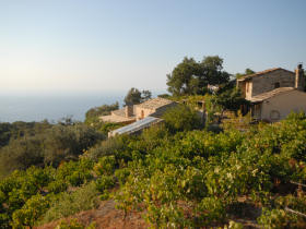 The villas and the south side of the vineyard