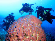 Diving & barrel sponge, Cayman Islands. Photo by Cayman Islands Tourist Board