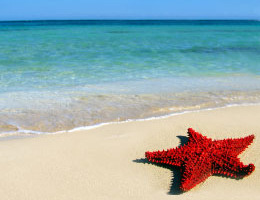 Star fish on the beach, responsible hotels of the world
