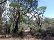 Surrounding bush land at Yelverton Brook, Western Australia. Photo by Richard Madden