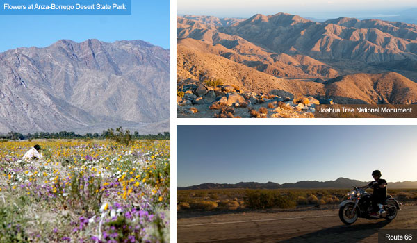 Anza-Borrego desert in bloom, Joshua Tree National Park and Route 66