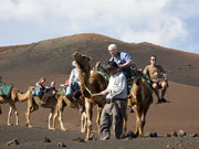 Camel train at Timanfaya National Park, Lanzarote. Photo by Nick Haslam