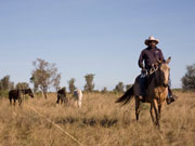 Cattle muster, Home Valley Station on the Gibb River Road. Photo by Nick Haslam