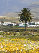 Flower landscape, Lanzarote. Photo by Lanzarote Tourist Board