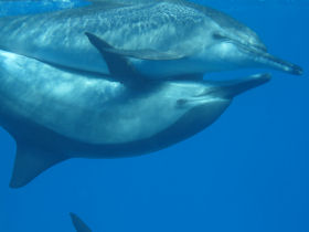 Cruise and swim with dolphins in Egypt