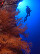 Diving in Lanzarote. Photo by Lanzarote Tourist Board