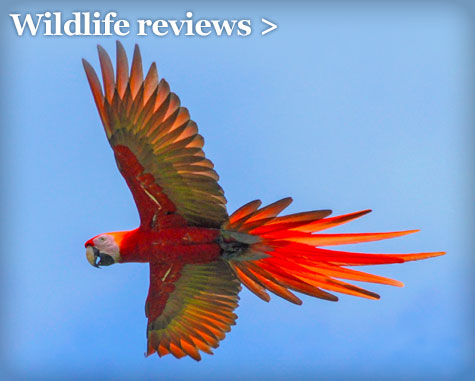 Wildlife reviews