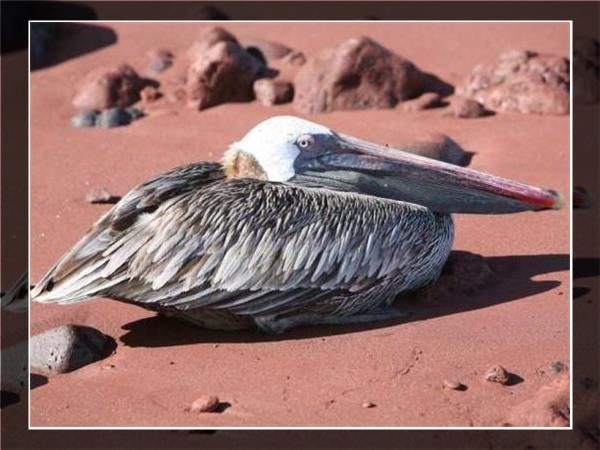 Galapagos family holiday