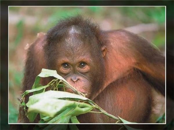 Borneo family holiday to see Orangutans