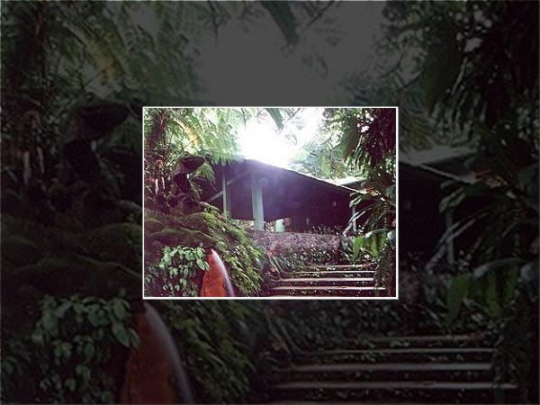 Rainforest accommodation in Dominica