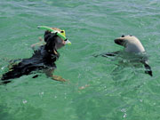 Snorkeller with seal, South Australia. Photo by South Australia Tourist Board