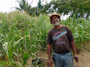 Sugar cane farmer, Cayman Islands. Photo by Cayman Islands Tourist Board