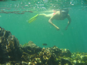 Snorkeling around the Galapagos Islands