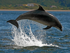 Scotland, dolphin and wildlife watching trips