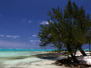 Tree at Rum Point, Cayman Islands. Photo by Cayman Islands Tourist Board