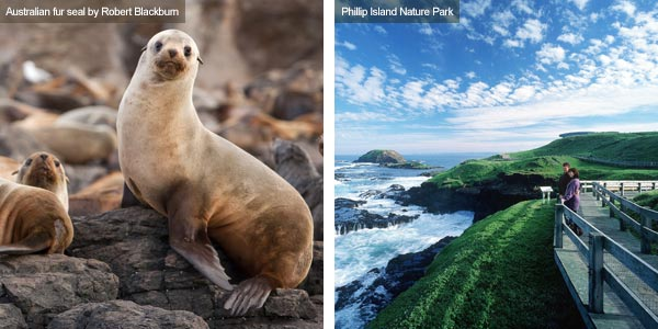 Australian fur seal and Seal Rocks, Victoria. Photos by Victoria Tourist Board